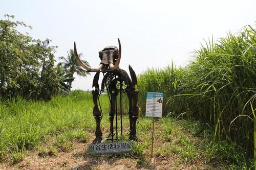 胡厝寮外婆的彩繪牆旁牧草迷宮內暗藏猛瑪象骨骸。(台南市政府交通局提供)