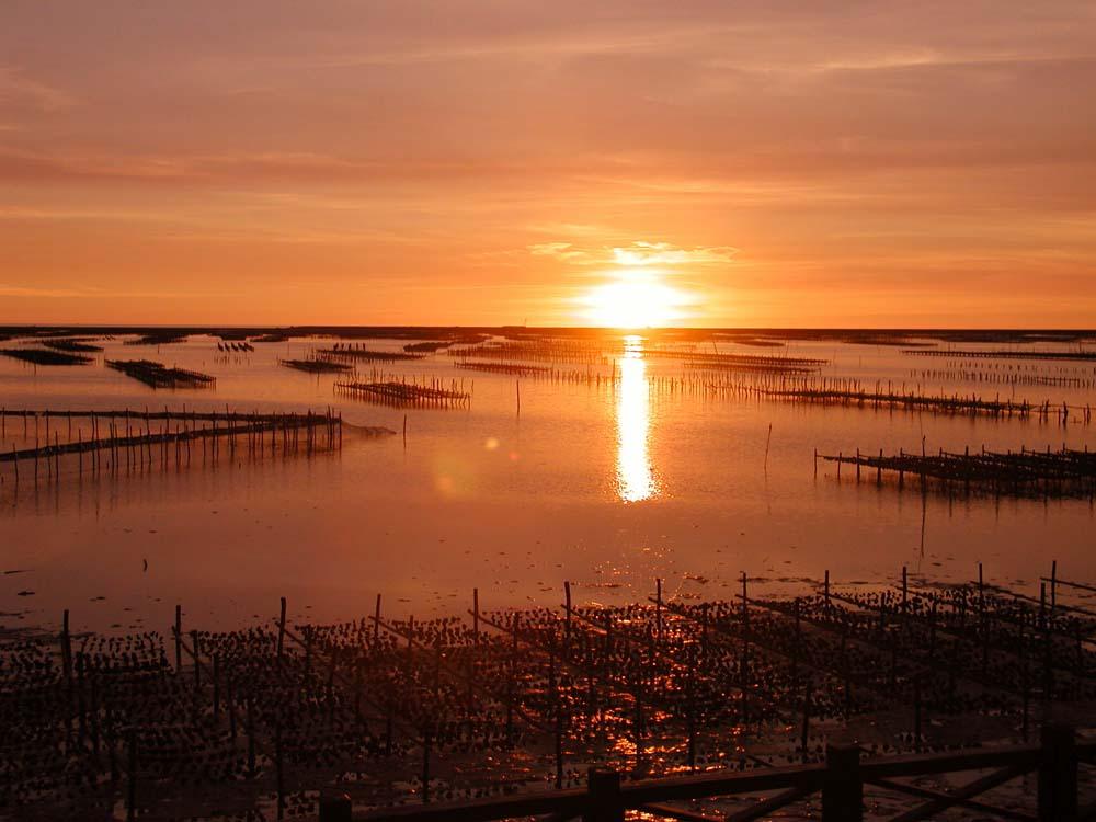 台南養殖產業冠全球