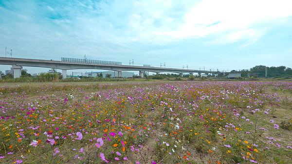 賴市長爭取安平港為國際花卉拍賣市場