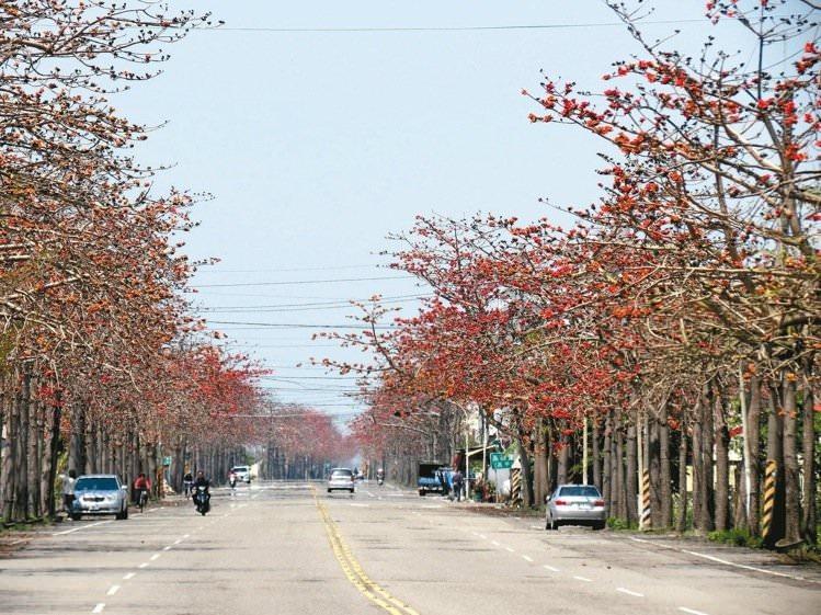 南21線木棉道最長最密集,但因屬幹道人車多,賞花拍照要留意交通安全。 記者周宗禎/攝影